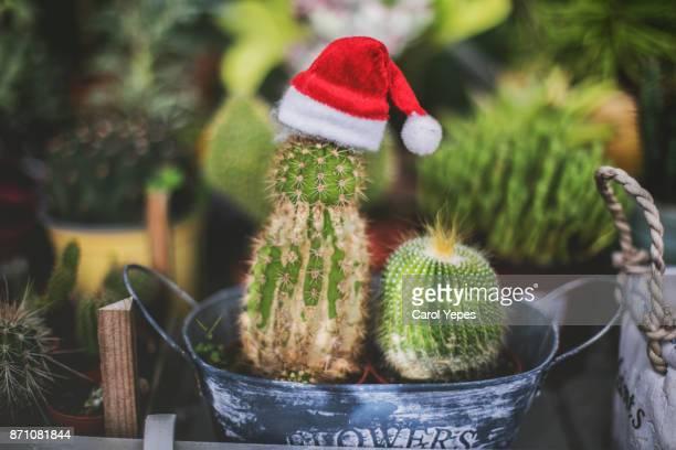 Cactus wearing a Santa hat
