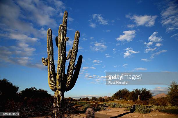 A cactus which has been struck by golf balls on 9th hole on The Tallon Course at the Gray Hawk Golf Club Scottsdale on December 26 2012 in Scottsdale...