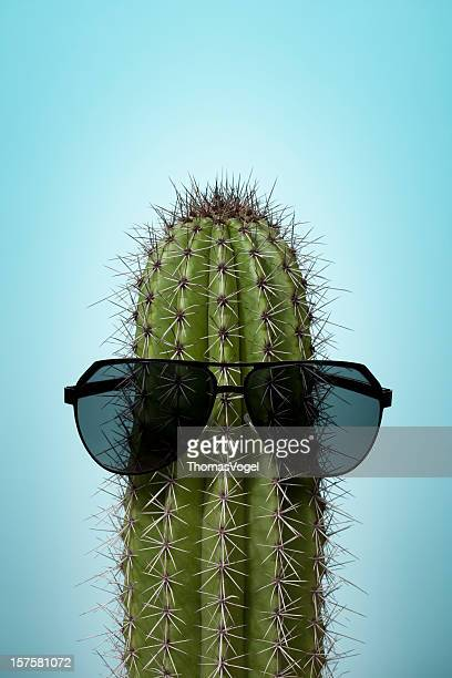 Cactus with sunglasses on blue