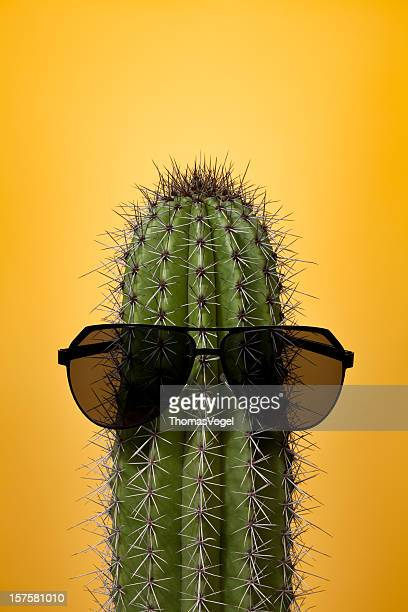 Cactus with sunglasses on yellow