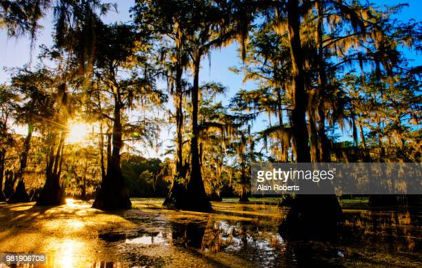 caddo lake at sunset in color - caddo lake stock pictures, royalty-free photos & images