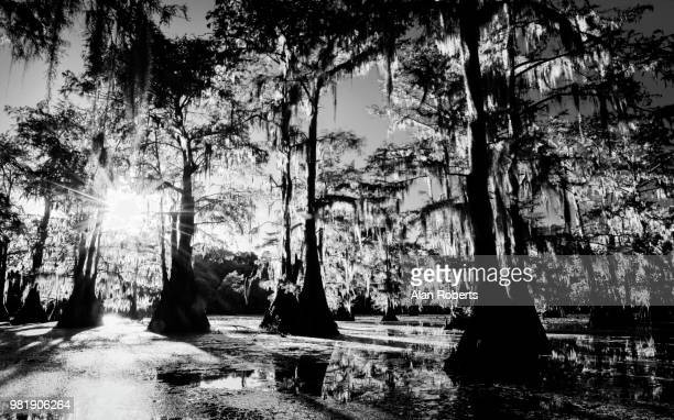 caddo lake at sunset - caddo lake stock pictures, royalty-free photos & images