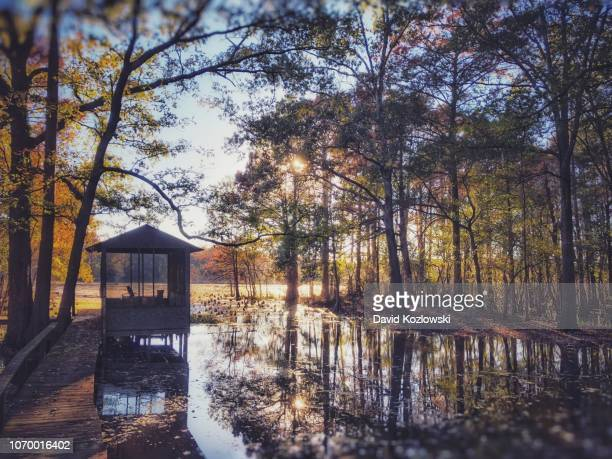 caddo lake hideaway - caddo lake stock pictures, royalty-free photos & images