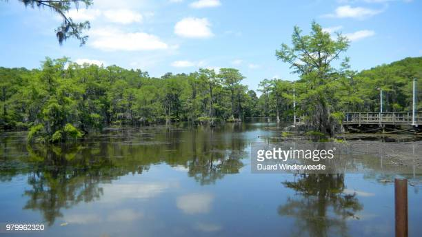 Caddo Lake / Louisiana