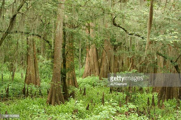 caddo lake state park forest - caddo lake stock pictures, royalty-free photos & images