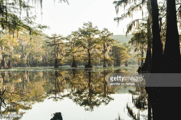 caddo lake state park river or swamp - caddo lake stock pictures, royalty-free photos & images