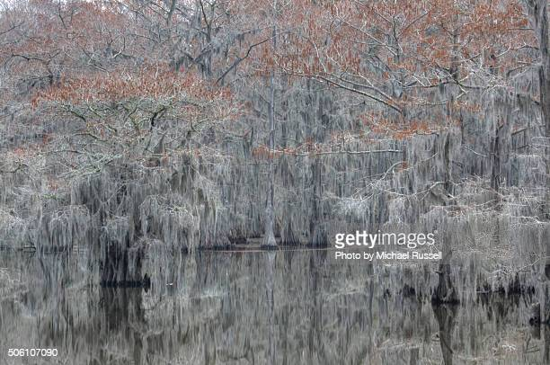 Caddo Lake Swamp
