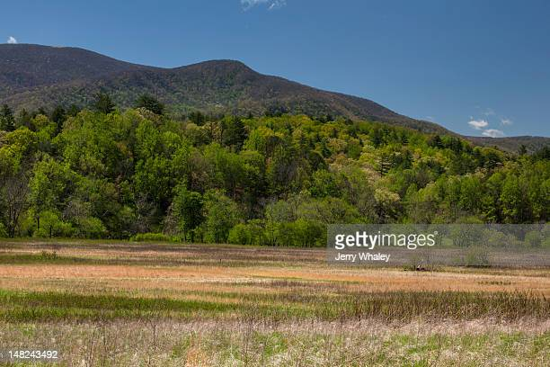 cades cove, spring - cades cove stock pictures, royalty-free photos & images