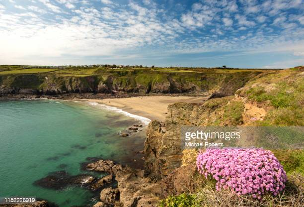 caerfai beach on the pembrokeshire coast path near st davids - st davids day stock pictures, royalty-free photos & images