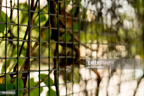 Cage with plants growing on it