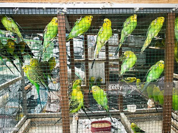 Caged birds are displayed for sale at the bird market in Malang on Juni 2 2015 The Bird Market is just one of the tourist attractions of this city...