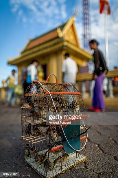 CONTENT] Caged birds before being released for Buddhist prayers Royal Palace Square Phnom Penh Cambodia SouthEast Asia Asia