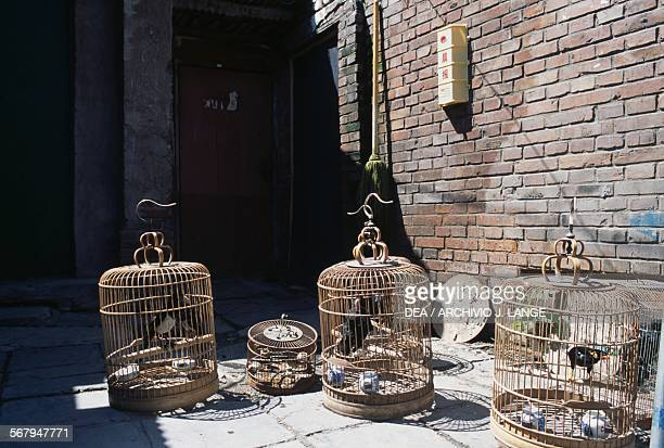 Caged birds, Beijing, China.
