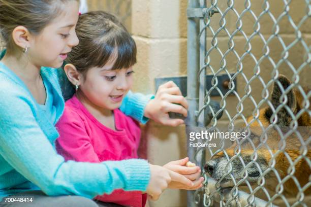 caged dog - dog pound stock pictures, royalty-free photos & images