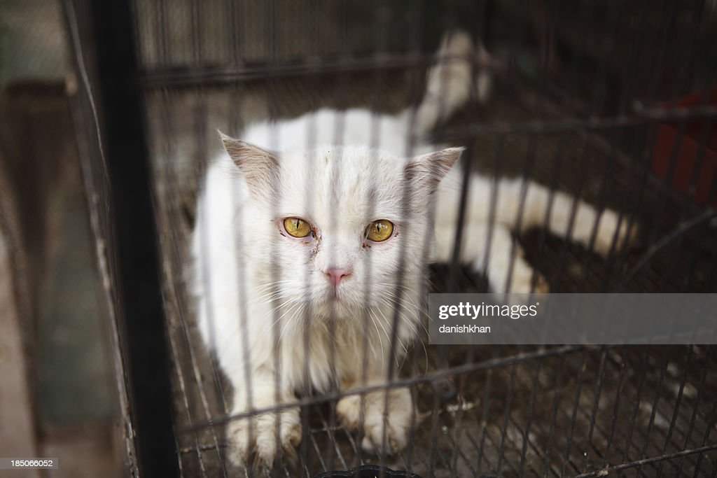 Caged Sad Persian Cat Pet Shop : Stock Photo