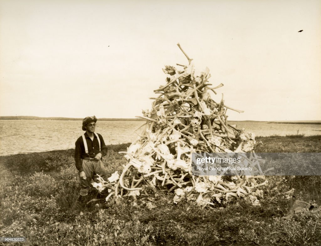 cairn of caribou heads and horns built by eskimos at the deer