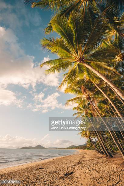 cairns palm cove beach - cairns stock photos and pictures