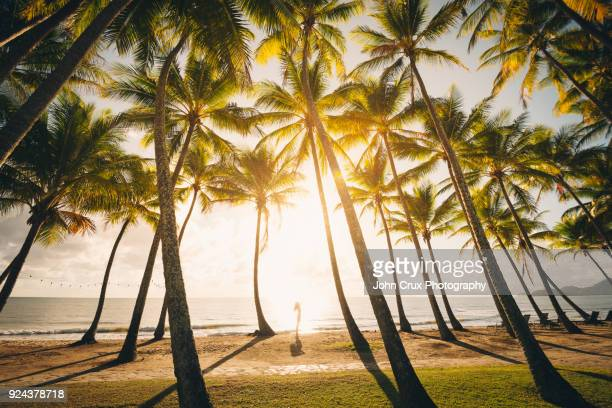 cairns palm tree tourist - cairns stock photos and pictures