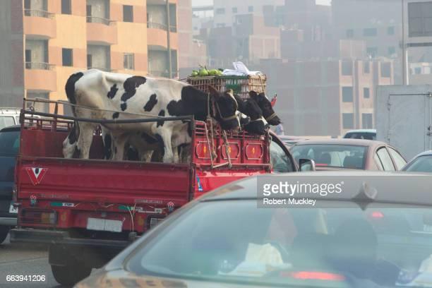 Cairo Rush-Hour