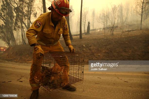 Cal Fire Captain Steve Millosovich carries a cage full of cats that were found in the road after the Camp Fire moved through the area on November 9...