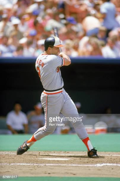 Cal Ripken Jr. Of the Baltimore Orioles bats during an MLB game at Kaufman Stadium n Kansas City, Missouri. Ripken played for the Baltimore Orioles...