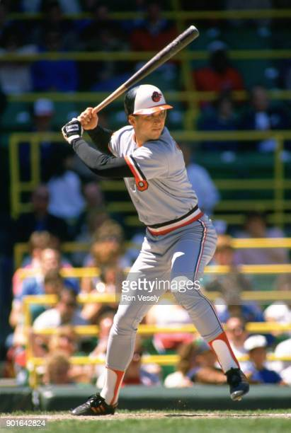 Cal Ripken Jr of the Baltimore Orioles bats during an MLB game versus the Chicago White Sox at Comiskey Park in Chicago Illinois during the 1986...