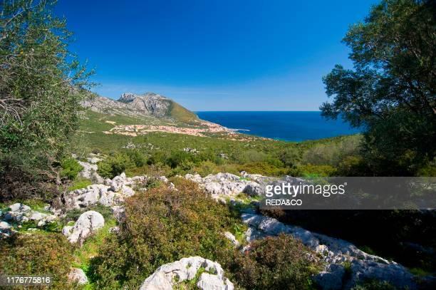 Cala Gonone bay Dorgali Nuoro Sardinia Italy Europe
