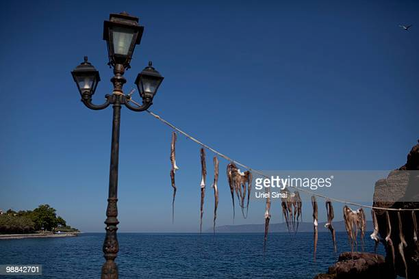 Calamari hungs to dry in the sun next to a restaurant on May 1 2010 on the island of Lesbos Greece Independent travel agency Sunvil has stated that...