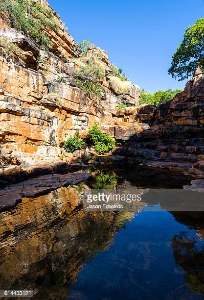a freshwater waterhole in a gorge provides shelter from the desert heat. - waterhole stock pictures, royalty-free photos & images
