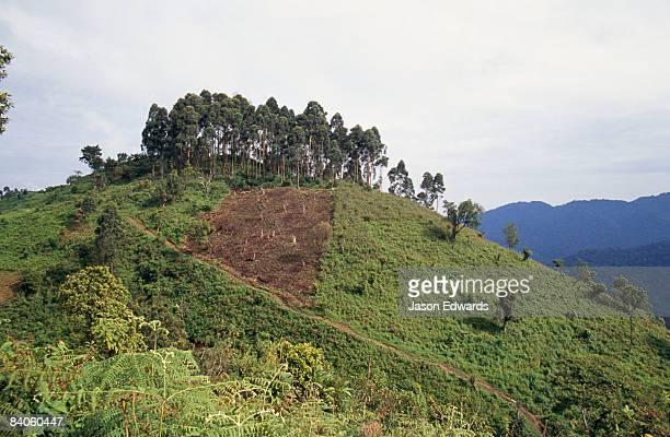 Caldera Mountains District of Kisoro, Uganda.