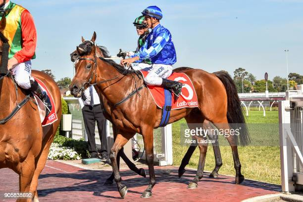 Calendar Lad ridden by Chris Symons returns to scale after winning the Ladbrokes Info Hub at Caulfield Racecourse on January 17 2018 in Caulfield...