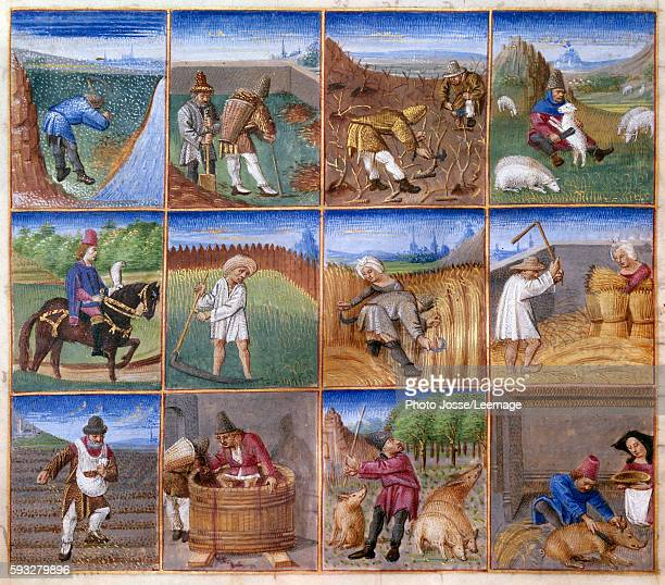 agricultural works raking leaves shearing falcons hunting harvest threshing wheat sowing harvesting Miniature from The Rustican Ruralia commodaThe...
