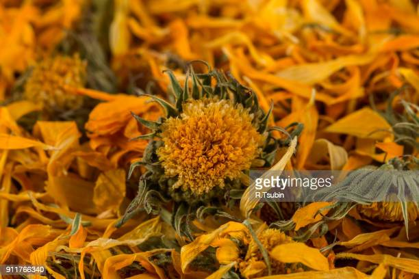 calendula flower tea for infusion - pot marigold stock pictures, royalty-free photos & images