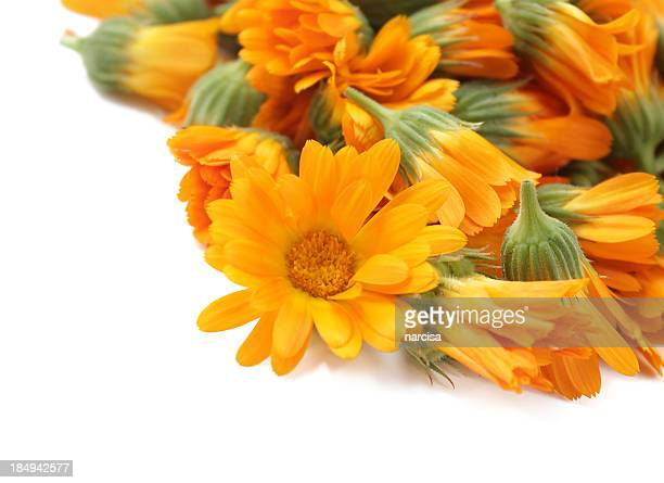 calendula over white - pot marigold stock pictures, royalty-free photos & images
