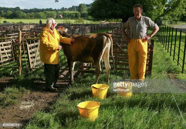 Calf is washed down and cleaned as preparations are made to show livestock during the Osmotherley Country Show on August 5, 2017 in Osmotherley,...