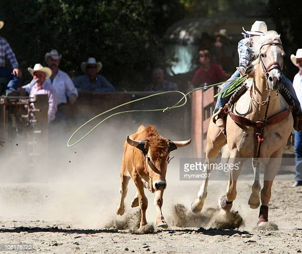 Calf Roping Action