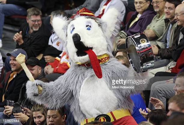 Calgary Flames mascot Harvey the Hound gets the crowd fired up during NHL preseason action against the New York Islanders on September 27 2011 at the...
