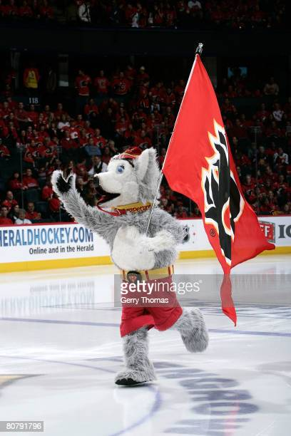 Calgary Flames mascot Harvey the Hound riles up the home town crowd against the San Jose Sharks on April 20, 2008 of the 2008 NHL conference...