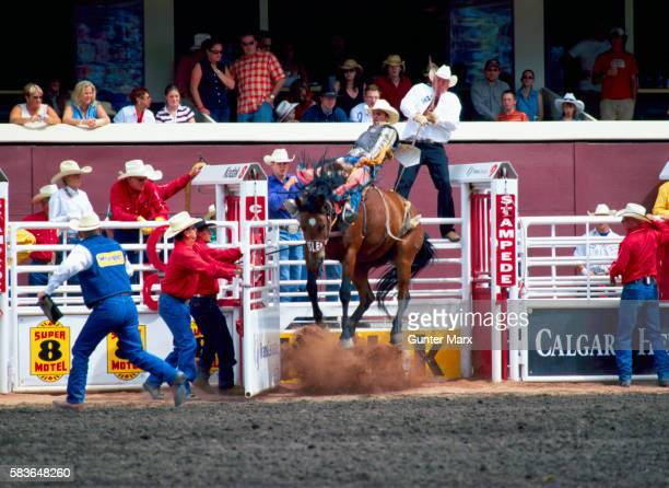 calgary stampede, calgary, alberta, canada - calgary stampede stock pictures, royalty-free photos & images