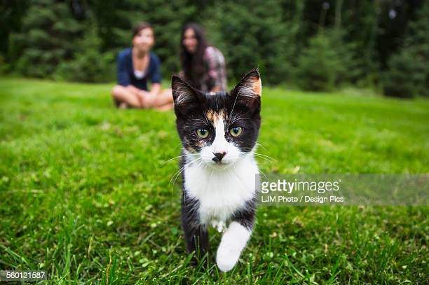 Calico kitten coming towards camera on the grass with two girls sitting in the background