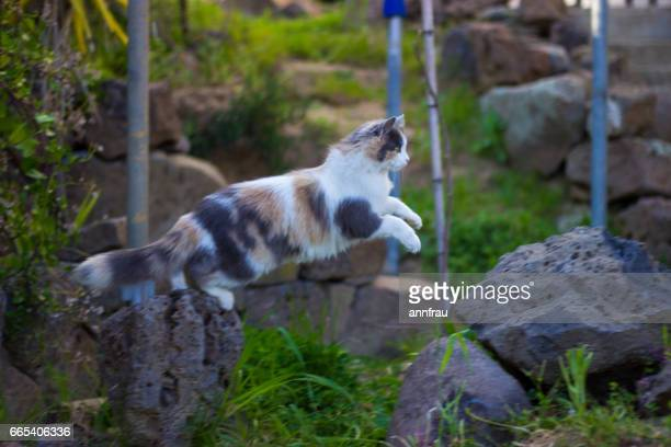 calico kitty - annfrau stock pictures, royalty-free photos & images