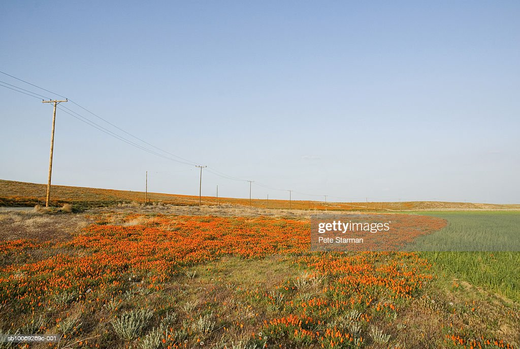 USA, California, Antelope Valley, California Poppy Reserve, meadow along road : Stockfoto