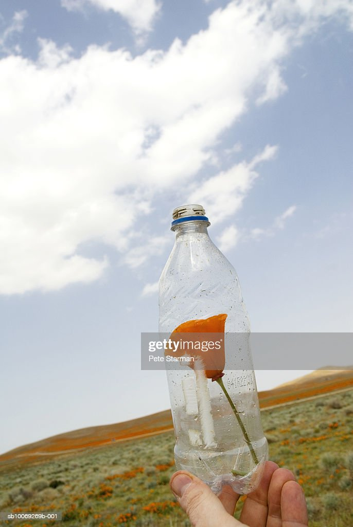 USA, California, Antelope Valley, California Poppy Reserve, person holding poppy in plastic bottle, close up of bottle : Stockfoto