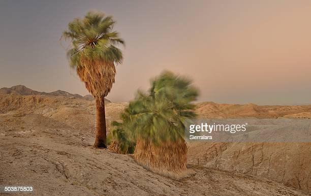 USA, California, Anza-Borrego State Park, Windy Five Palms at Dusk