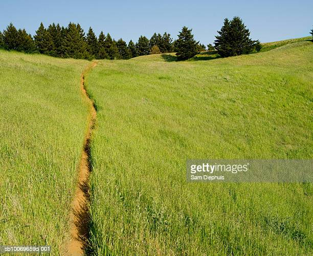 USA, California, Bolinas Ridge, path through meadow