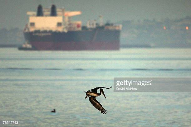California brown pelican dives for fish near an oil tanker moored outside the ports of Los Angeles and Long Beach at sunrise on the eve of Earth Day...