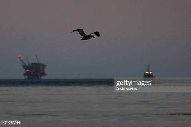 California brown pelican flies over an oil slick in the ocean off Refugio State Beach as an oil platform and a boat deploying a boom to contain the...