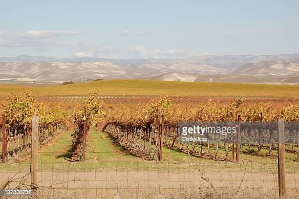 California Central Valley Vineyard after harvest