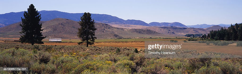 USA, California, Chamisa (Chrysothamnus nauseosus) growing in field, pasture and hills in background : Stock Photo