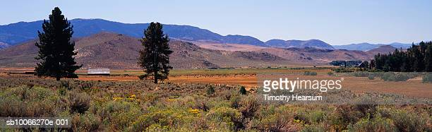 usa, california, chamisa (chrysothamnus nauseosus) growing in field, pasture and hills in background - timothy hearsum stock photos and pictures